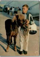 31ksl 1334 HORSE   (DIMENSIONS 10 X 15 CM) - Chevaux
