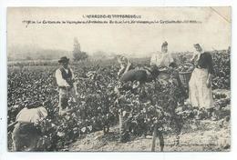 La Culture De La Vigne Dans L'ardeche - Non Classificati