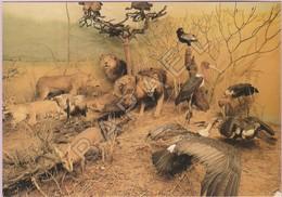 Ville-sous-Anjou (38) - Musée Animalier - Savanne Africaine - Lions-Vautours-Marabouts -Studio Saugeot - Autres Communes