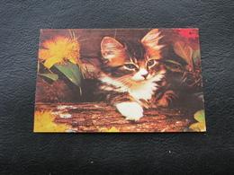 USSR Soviet Russia Pocket Calendar Kitten Cat 1989 - Calendars