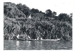 Photo Afrique 12,8 X 17,8 Cms, AEF, Moyen Congo - En Pirogue Sur Le Congo - Afrique