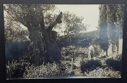 Palestine Jerusalem 8m Pictorial 1932 Anzio Italy Garden Gethsemane Mount Of Olives - Palestine