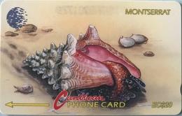"MONTSERRAT  -  Phonecard  - Cable § Wireless ""  -  "" Strombus Pugilis ""  -  $20 - Montserrat"