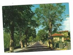 3605 - NICOLOSI CATANIA L' ENTRATA AL PAESE DA SUD 1971 - Altre Città
