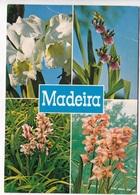 FUNCHAL, Madeira, Orchids In The Quinta Da Boa Vista, Unused Postcard [23850] - Madeira