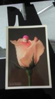 CP - Rose Baby Par Anne Geddes - Autres