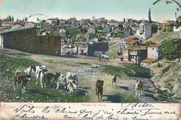 CONSTANTINOPLE - N° 8748 - GROUPE DE CHIENS - Turquie
