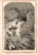 Chromos, Montgolfiere, Experience Du 19 Septembre 1783 (bon Etat) - Autres