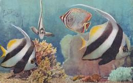 Monaco Aquarium De Monaco - Sonstige