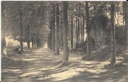 WESTERLOO - DE GROT - Belgique