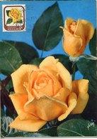 51525 New Zealand  Maximum  1976 , Rose  Rose Jubilee - Roses