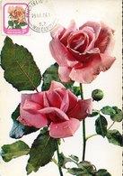 51526 New Zealand  Maximum  1976 , Rose  Rose Meilland - Roses