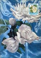 51527 New Zealand  Maximum  1976 , Rose  Rose Iceberg - Roses