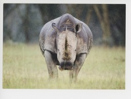 Kenya - Rhinocéros Blanc Sous La Pluie, Lac Nakuru - Masaï-Mara (Denis-Huot Photographe) Muséum Le Havre - Rhinoceros