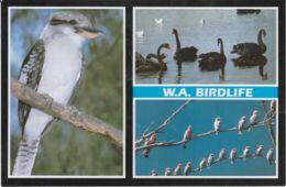 Postcard - W.A. Birdlife Three Views - Card No.wl4 Unused Very Good - Postcards