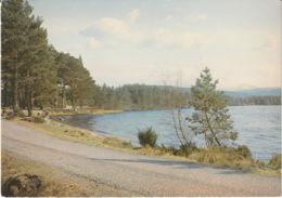 Postcard - Loch Garten, Strathspey, Invernes-shire - Card No.83932 Unused Very Good - Postcards