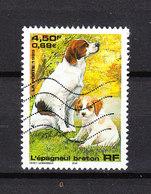 Francia   -  1999.  Cane Bretone. Breton Dog. - Cani