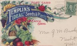 Templin's Company 'Ideal' Seeds And Plants, Calla Ohio Advertisement, 1900s Vintage Postcard - Pubblicitari