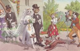 Mainzer Artist Image Cats Dressed As People Wedding Scene, Camera C1950s/60s Vintage Belgian Postcard - Altre Illustrazioni