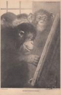 'Kunstkritiker' 'Art Critic' Monkey As Artist And Critic C1920s Vintage Postcard - Monkeys