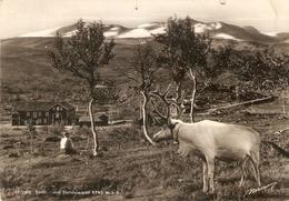 Noorwegen : Grotli 1952 - Norvège