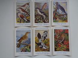Beau Lot De 9 Cartes Postales Oiseaux  Oiseau  Illustrateur H.Dupond     Mooi Lot Van 9 Postkaarten Van Vogels  Vogel - 5 - 99 Postkaarten