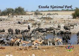Namibia Etosha National Park New Postcard - Namibia