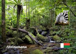Madagascar Atsinanana Rainforest UNESCO New Postcard Madagaskar AK - Madagascar