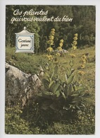 Gentiane Jaune, Les Plantes Qui Vous Veulent Du Bien  (tonic Digestif) Cp Vierge Pot Pharmacie - Medicinal Plants