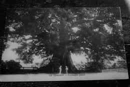 CPA CONAKRY  Guinée Française ARBRE  FROMAGER GÉANT Carte Postale Éditeur  Afrique  Guinée Française Ex Colonie - Guinée Française