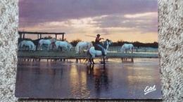 CPSM CHEVAL CHEVAUX EN CAMARGUE LA MANADE AU COUCHER DU SOLEIL ED ESTEL - Horses