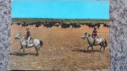 CPSM CHEVAL CHEVAUX CAMARGUE STES MARIES DE LA MER 13 MANADE DE TAUREAUX ET GARDIANS ED SL - Horses