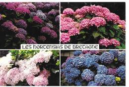 29   Fleurs  Terre Des Hortensias - Francia