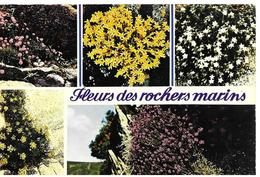 29   Fleurs  Terre Des Rochers Marins - Francia