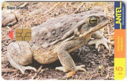 URUGUAY A-285 Chip Antel - Animal, Frog - Used - Uruguay
