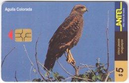 URUGUAY A-310 Chip Antel - Animal, Bird, Eagle - Used - Uruguay