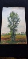 ARBRE Peinture Sur Papier épais Du Docteur J ROGER De Levroux 36 Indre ( Habitations église Pré Forêt ) - Gouaches