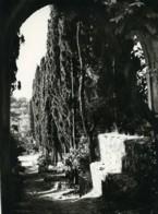 Tunisie Carthage Etude Jardin Paysage Ancienne Photo Leon Lemaire 1935 - Afrique