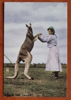 The Changing Fashion Of The Kangaroo Carte Postale - Advertising