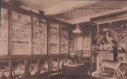 Bastogne Etablissement Des Soeurs De Notre-Dame Musée - Bastogne