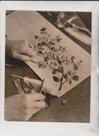 INTEREST OF THE QUEEN MISS C SALISBURY EARLS COURT ESSEX   24*19CM Fonds Victor FORBIN 1864-1947 - Profesiones