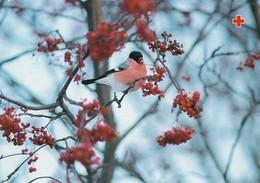 Postal Stationery - Bird - Bullfinch In Winter Landscape - Red Cross 1998 - Suomi Finland - Postage Paid - Finlande