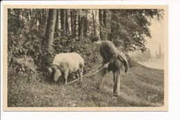 Carte EN PERIGORD  Le Chercheur De Truffes  ( Cochon ) - Francia