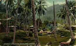 MALASIA // MALAYSIA. COCOANUT PLANTATION, AYER ETAM, PENANG - Malasia