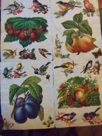 Lot De 101 Chromos Collés Sur Papier.Fleurs Fruits Et Oiseaux. - Fleurs