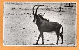 Hwange Wankie National Park Zimbabwe Old Postcard - Zimbabwe