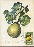51577  Albania, Maximum 1966, Cydonia Vulgaris,  Quince, Cognassier  Quitte - Fruits