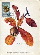 51578  Albania, Maximum 1966, Nespola, Medlar, Mispel, Nèflier - Fruits
