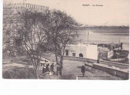 MAROC(RABAT) ARBRE(DOUANE) - Rabat