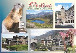 ORDINO - Marmotte - Andorre